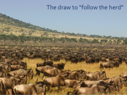 The draw to follow the herd